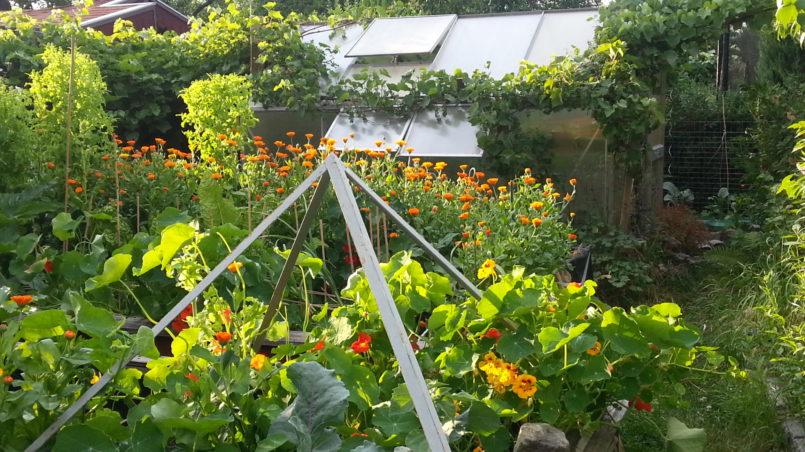 Gärtnern auf Hochbeeten 1