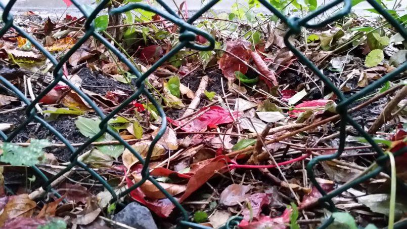 Loch im Zaun für den Igel