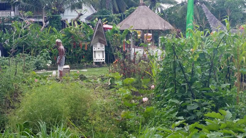 Ein Ökogarten in Ubud (Bali)